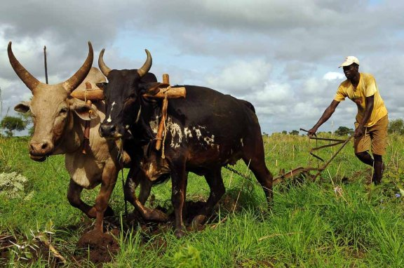 9jpg-Uganda-the-Karimojong-people-between-past-and-present-farming-and-agriculture.